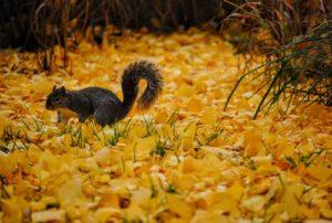 Squirrel Treatment Fife