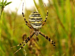 Spider Treatment Fife