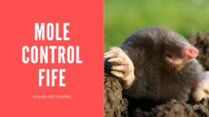 Mole Control Fife