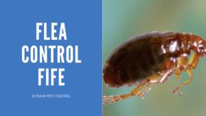 Flea Control Fife